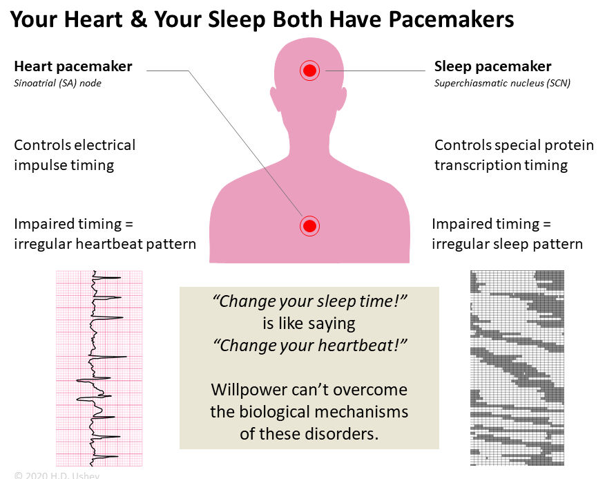 sleep timing vs heart timing